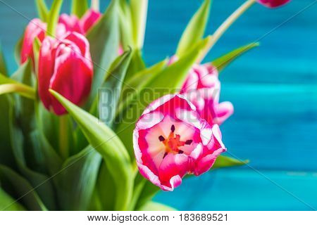 Bouquet Of Pink Tulips On Blue Wooden Background.. Happy Mother's Day.
