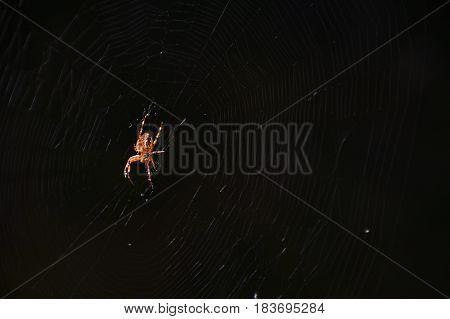 Spider in the net found on Saremaa island