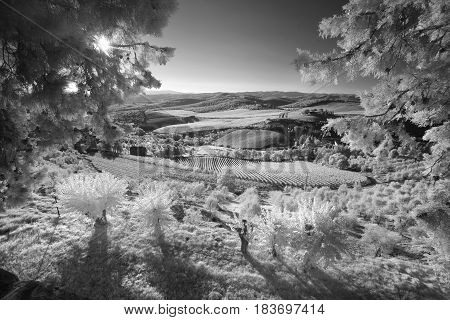 Infrared landscape of Tuscany. The survey was conducted in the infrared range. It turned out an unusual look.