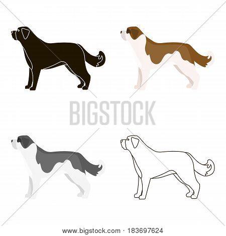 St. Bernard dog vector illustration icon in cartoon design