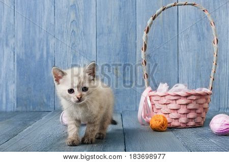 White funny kitten with pink wool ball and straw basket. Playful small cat at blue wood background.