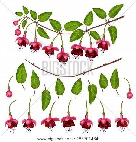 Pink fuchsia elements set isolated on white background. Constructor for flowers branches.