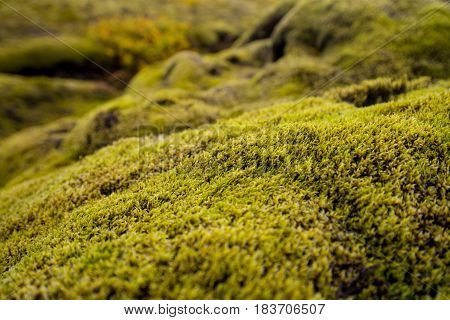 Icelandic lanscape covered by Endless green moss