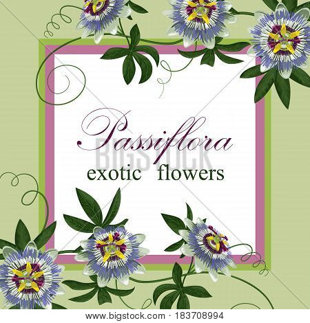 Passiflora exotic flowers. Template for postcards, greeting cards, wedding invitations. Vintage tropical floral composition.
