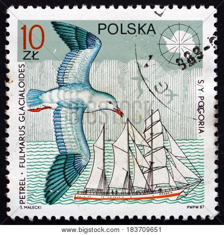 POLAND - CIRCA 1987: a stamp printed in Poland shows Southern Fulmar Fulmarus Glacialoides and Yacht Pogoria circa 1987