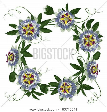 Passiflora round frame. Composition with exotic branch isolated on white. Background for wedding invitations, greeting cards.