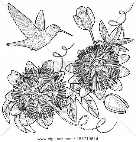 Hummingbird and passiflora. Template for postcards, greeting cards, wedding invitations. Outline tropical floral composition for coloring books.