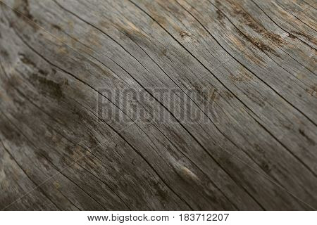 Tree trunk background and texture. Wood texture of tree trunk. Closeup view of old vintage wood texture. Abstract texture and background for designers. wooden background.