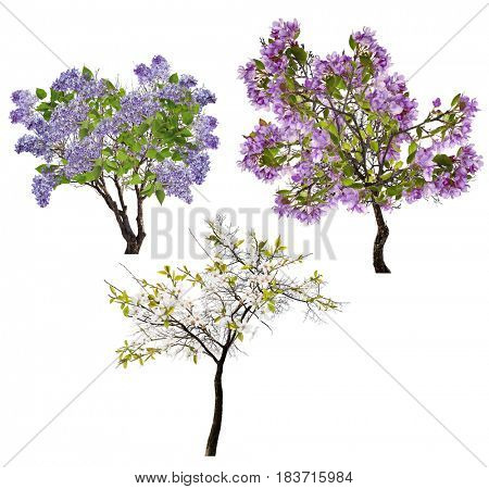 blossoming trees isolated on white background