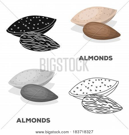 Almonds.Different kinds of nuts single icon in cartoon style vector symbol stock web illustration.