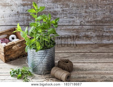 Preparing an urban vegetable garden: a mint plant in a tin pot on a wooden table
