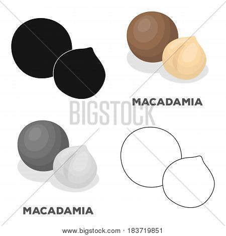 Macadamia.Different kinds of nuts single icon in cartoon style vector symbol stock web illustration.