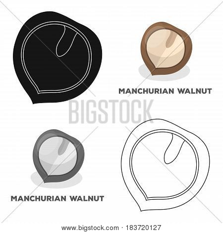 Manchurian walnut.Different kinds of nuts single icon in cartoon style vector symbol stock web illustration.
