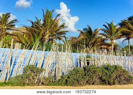 Wall and row of palm trees in Tulum Mexico