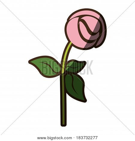 colorful silhouette shading of pink rose vector illustration