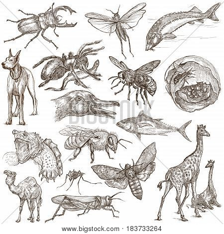 Animals around the World. Collection of an hand drawn illustrations. Freehand sketches. Line art. Drawings on white isolated.