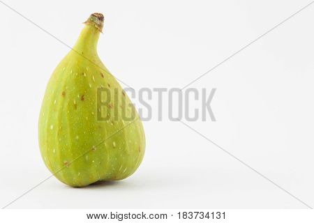 Common fig (Ficus carica) isolated in white background