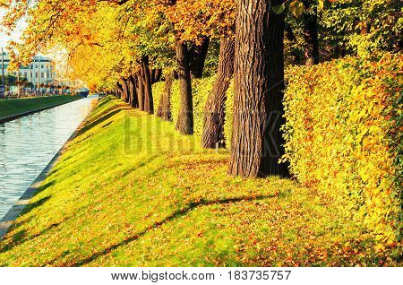 St Petersburg Russia. Autumn landscape - Swan Canal in St Petersburg Russia and autumn park with golden autumn trees in sunny weather. Bright autumn sunset landscape with autumn trees - autumn nature with fallen autumn leaves