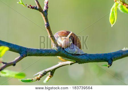 On A Farm, Snails Creep Along Fruit Trees.