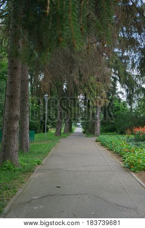 asphalted footpath in beautiful green garden with pine trees green grass and flower