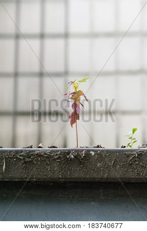 little tiny tree with colorful different leafs which grow right from the concrete plate. concept image