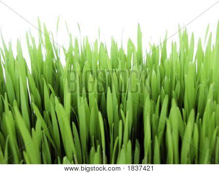 Fresh Grain