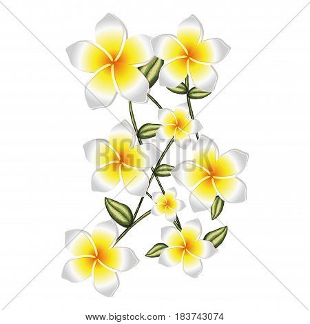 colorful background of malva flowers in white color with stem and leaves vector illustration