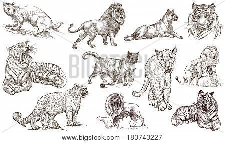 Animals - CATS - around the World. Collection of an hand drawn illustrations. Freehand sketches. Line art. Isolated on white.