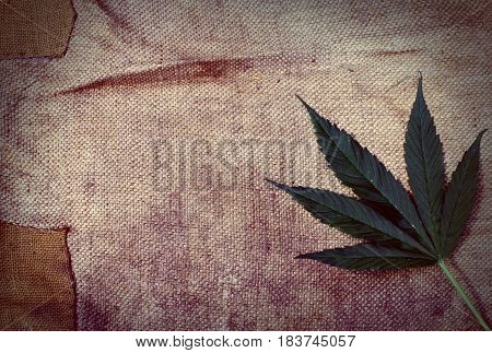 Old messy sackcloth and indica marijuana leaf in the corner texture or background