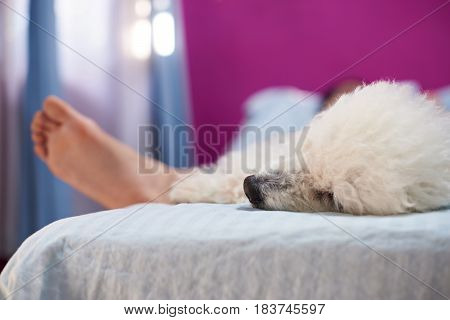 Human Sleep With Dog On Bed