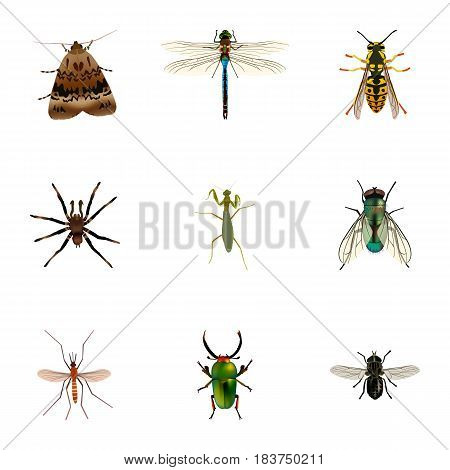 Realistic Butterfly, Midge, Arachnid And Other Vector Elements. Set Of Animal Realistic Symbols Also Includes Damselfly, Fly, Housefly Objects.