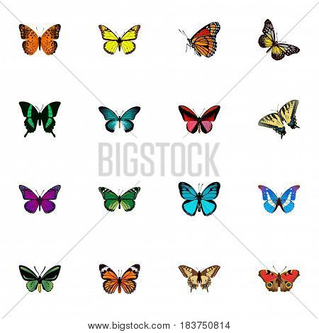 Realistic American Painted Lady, Birdwing, Summer Insect And Other Vector Elements. Set Of Moth Realistic Symbols Also Includes Malachite, Fly, Blue Objects.