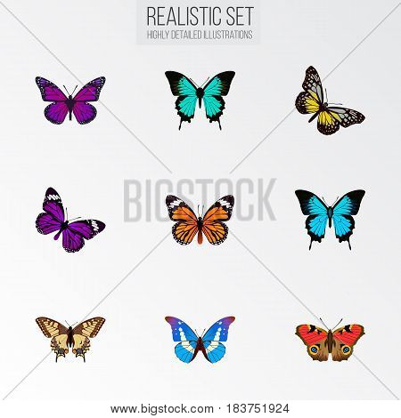 Realistic Bluewing, Monarch, Papilio Ulysses And Other Vector Elements. Set Of Moth Realistic Symbols Also Includes Blue, American, Beautiful Objects.