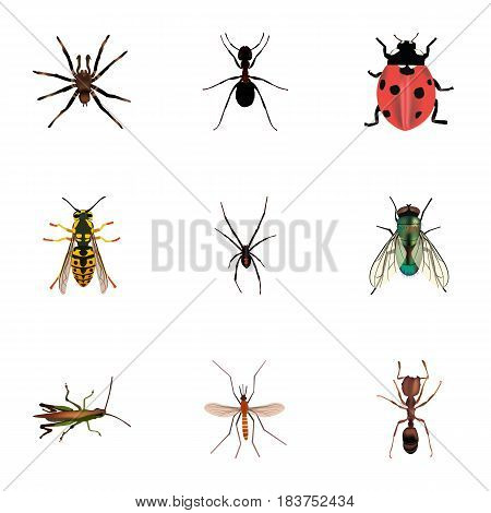 Realistic Bee, Spinner, Emmet And Other Vector Elements. Set Of Hexapod Realistic Symbols Also Includes Gnat, Ladybug, Insect Objects.