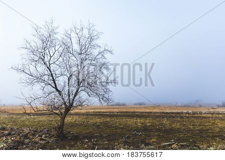 Tree with no leaves in foggy winter landscape. Shoshone Idaho USA.