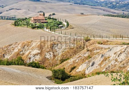 A little oasis among autumn ploughed fields next to a crevasse in Crete Senesi, Tuscany, Italy
