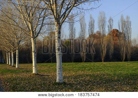 Milan (Lombardy Italy): the park known as Parco Nord at fall poster