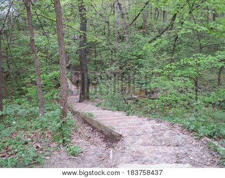Walkway thru the new spring tree growth at Starved Rock State Park