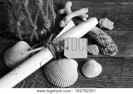 A low angle image of several seashells and rolled up note paper.