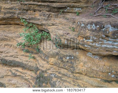 Wild flowers growing along sandstone and limestone outcrop at Starved Rock State Park