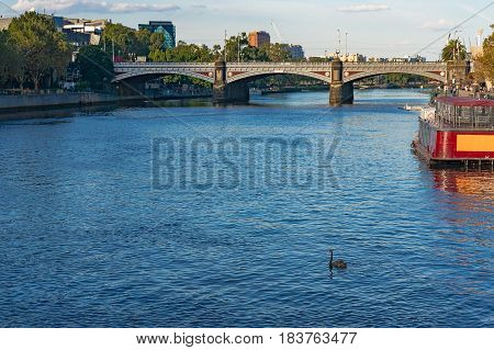 Urban Landscape With River And Black Swan