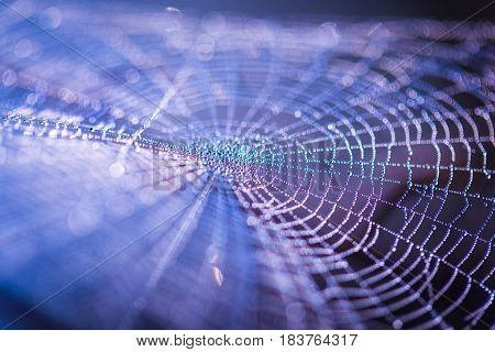 Spider Web With Dew Droplets In Big Close Up