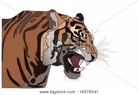 vector  close-up of a Tiger's face