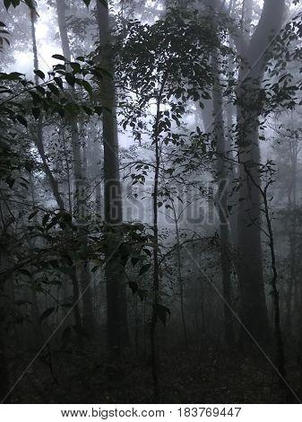 Kio Mae Pan Nature Trail in Doi inthanon National Park.