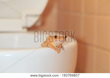 wildlife invade the house frog at bathroom