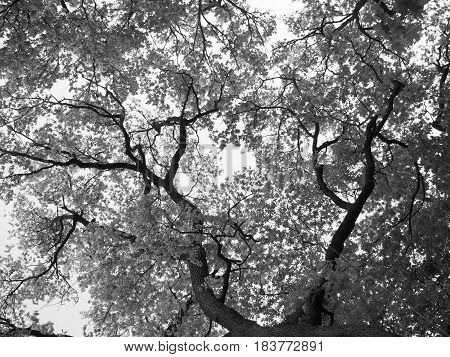 Low angle view tree and sky monochrome