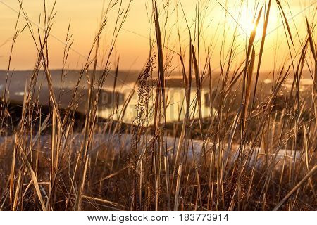 Beautiful abstract background of dry grass on the shore of a winding river in golden light at sunset