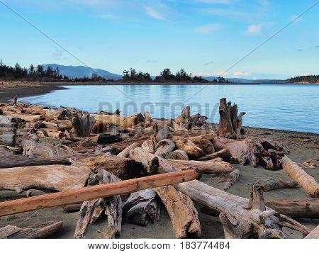 Driftwood on the sandy ocean beach, calm water