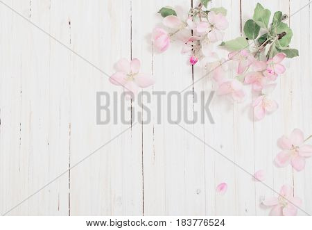 the apple flowers on white wooden background