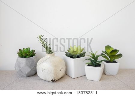 Variety of Succulent in pots home decoration